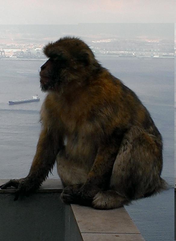 5 Macaque
