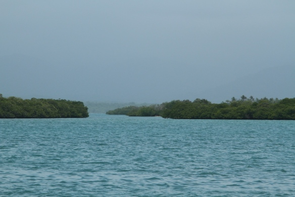12 mangrove