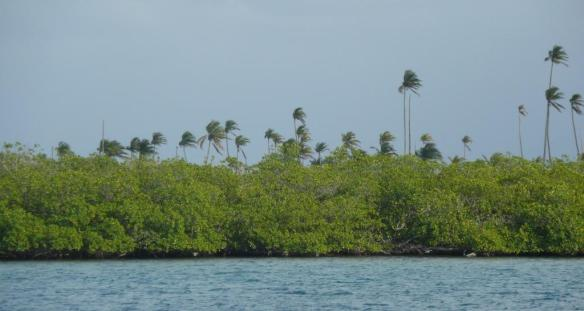 13 mangrove & palm trees
