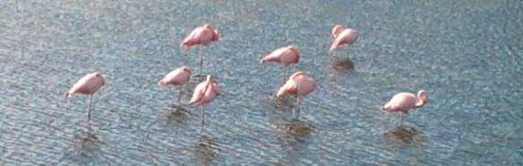 13 Pink Flamingos