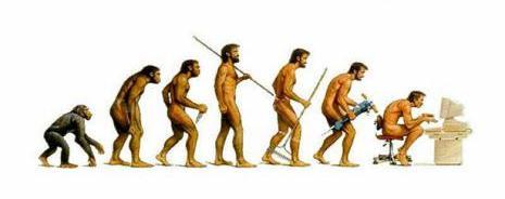 14 human evolution