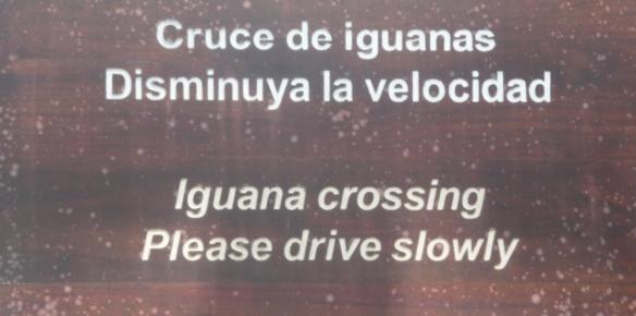 8 iguana crossing