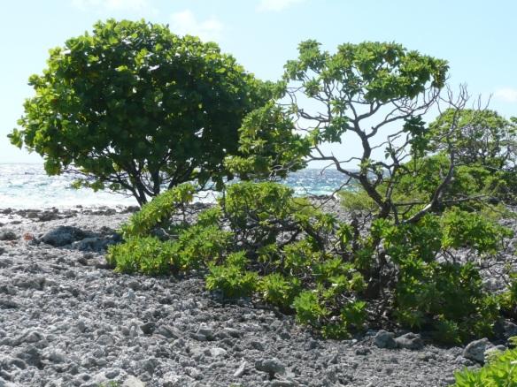 Il existait 2 villages sur l'atoll de Tahanea. Ils ont été abandonnés, la barrière de corail est trop étroite pour protéger de la houle. Une base est encore utilisée au moment de la récolte du coprah.