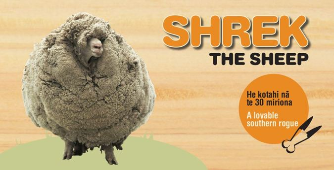 1 Shrek the sheep