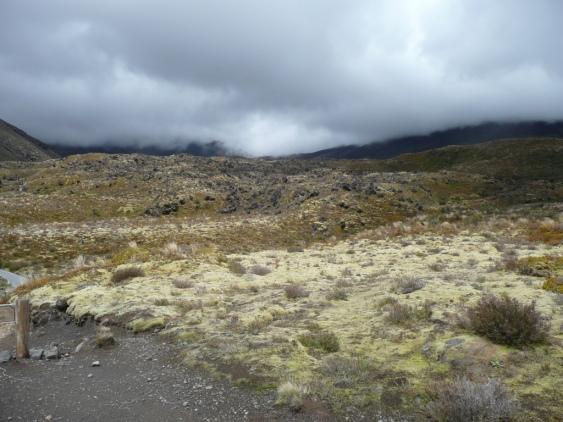 Lande dans le parc national du Tongariro au centre de l'ile du Nord.
