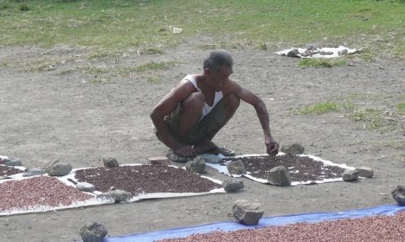 Banda Besar – le séchage des clous de girofle Le clou de girofle lui, s'envole en fumée sous la forme de kreteks, des cigarettes parfumées au goût légèrement sucré. L'Indonésie est le plus grand consommateur au monde de clous de girofle : 223 milliards de cigarettes sont fabriquées annuellement. La récolte des Moluques représente 80% de la production mondiale. Un business tellement profitable que ça ne pouvait pas manquer d'intéresser les membres de la famille Sudharto. Le fils a donc tenté d'arracher le monopole aux Chinois. Mais ceux-ci avaient des « stocks ». La spéculation s'est soldée par un échec et « Papa » a renfloué. Pour les Indonésiens ce n'est qu'un exemple supplémentaire de la corruption subie du dictateur (les prises illégales de Sudharto et sa famille sont estimées à 15 milliards de dollars durant les 30 ans de règne, soit 0.5% du PIB Indonésien cumulé sur la période. Pas mal mais peut mieux faire, Madoff s'est fait 65 milliards de dollars… sans complicité aucune, c'est bien connu).