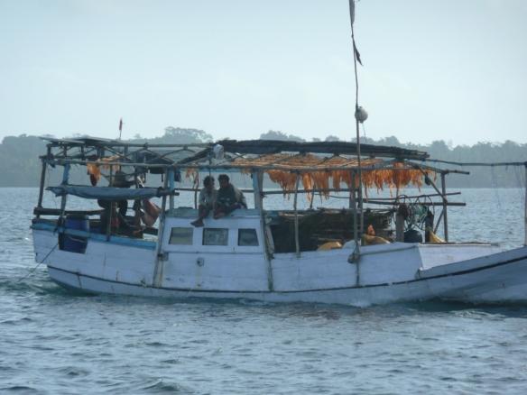 Récolte d'œufs de poisson – Tayandu – Kei island