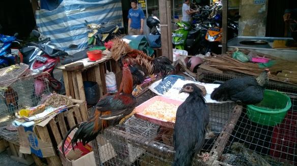 Marché de Tanjung Pinang - Volatiles à casserole